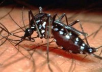 World-first dengue fever vaccine cleared for use in Mexico: