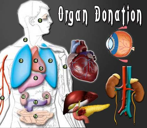Scotland to introduce soft opt-out system for organ donation