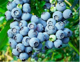 New research finds that berries may contain cancer-fighting compounds