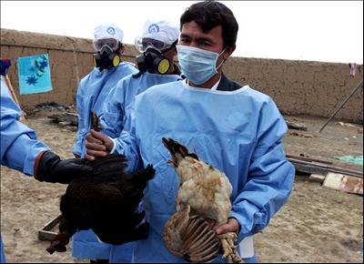 H5N1 : Death in Canada , First Case in North America