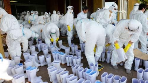 Japan culls chickens after bird flu outbreak
