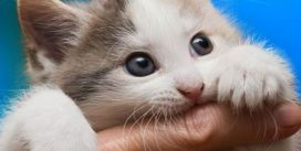 CDC warning about cat scratch disease