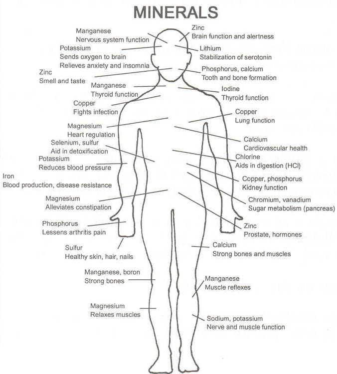 minerals-in-body