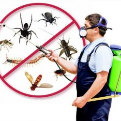 Why You need Pest Control at your Workplace