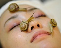 Snail cream is the new ingredient for your skin cream