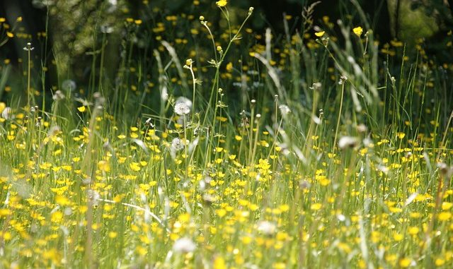 7 Reasons Your Allergies Are Worse Than Usual